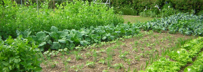 Ekologiczny ogród agroturystyka W Dolinie Modrzewi
